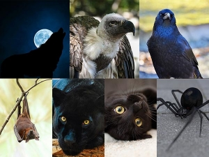 Pick An Animal And Know About Your Dark Side