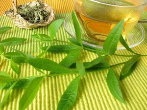 Lemon Verbena Health Benefits Side Effects Precautions In Tamil