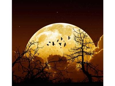 ஐப்பசியில் என்னென்ன விசேஷங்கள் - டைரியில குறிச்சிக்கங்க