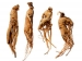 60 வயதிலும் உடலுறவில் முழு இன்பம் காண உதவும் இந்த மூலிகை பற்றி தெரியுமா?