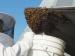 தேனீ கடிச்சிடாம தேன்கூட்டை எப்படி கலைக்கணும்னு தெரியுமா?... இந்த டிப்ஸை ஃபாலோ பண்ணுங்க...