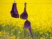 அலுவலகத்தில் இருந்து விசித்திரமான பொருட்களை திருடிய ஊழியர்கள் - வாக்குமூலங்கள்!