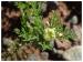 ஆண்களின் அந்தரங்க பிரச்சினைகளை தீர்க்கும் இந்த மூலிகையை பற்றி தெரியுமா.?